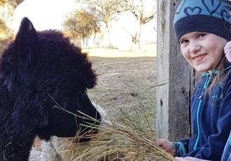 Alpaka Begegnung für Kinder
